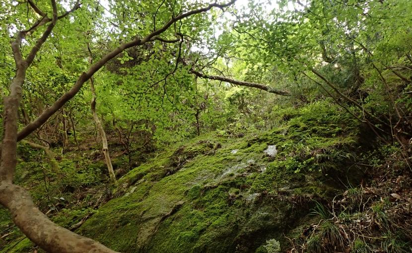 木ノ袋谷苔のルンゼ